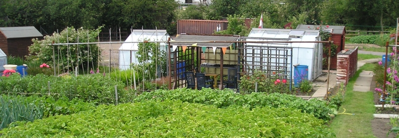 Southampton allotments greenhouse