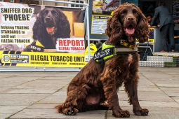 illegal tobacco sniffing dog - thumbnail